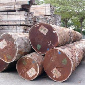 Afromosia Wood Log