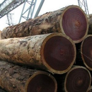 Azobe Wood Logs