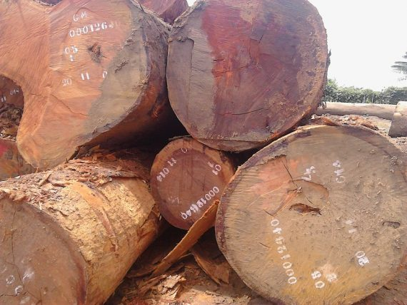 Beli Wood Logs