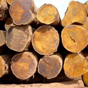 Bilinga Wood Logs