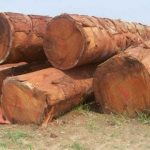 Doussie Wood Logs