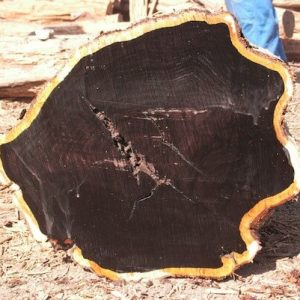 Ebony ( Black Ebony ) Wood Logs