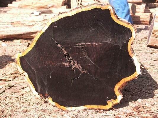 Ebony ( Black Ebony ) Wood Logs