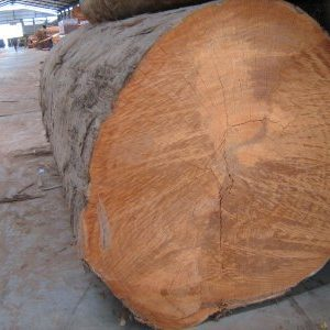 Iron Wood Logs