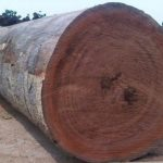 Mahogany Wood Logs