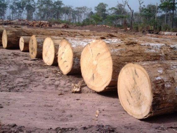 Makore Wood Logs