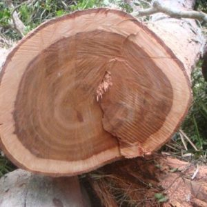 Moabi Wood Logs
