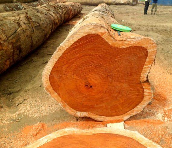Padauk Wood Logs