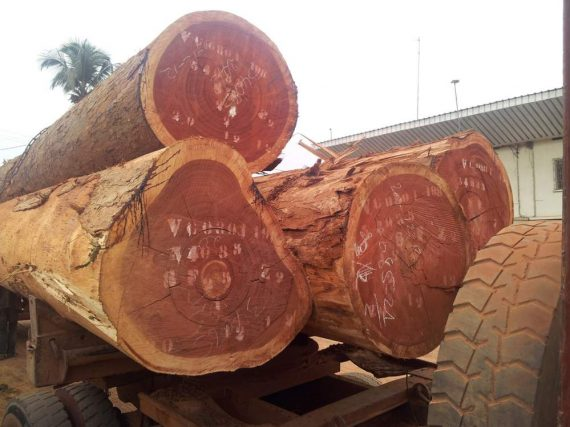 Sapelli Wood Logs