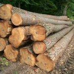 Teak Wood Logs
