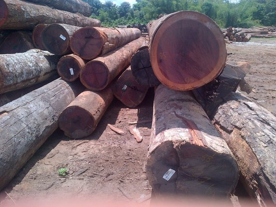 Zebrano Wood Logs