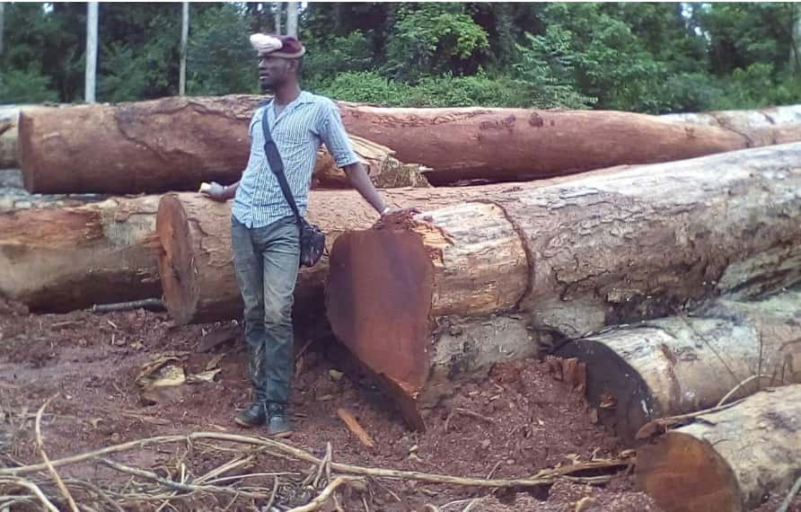 Export Timber Prices (Famous Cameroon Timbers with Cost and