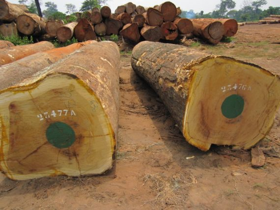 Iroko Wood Logs