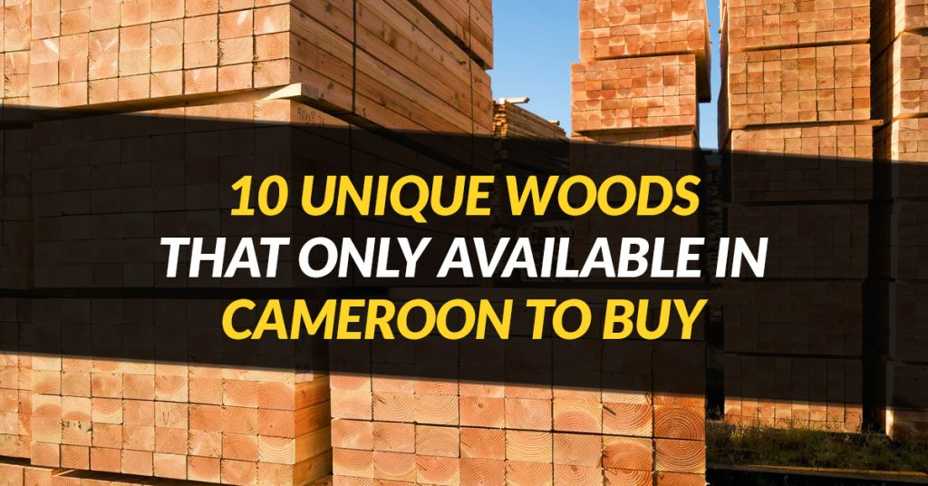10 Unique Woods That Only Available in Cameroon To Buy