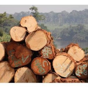 Black Limba (Frake) Wood Logs