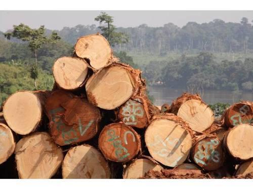Black Limba (Frake) Wood Logs
