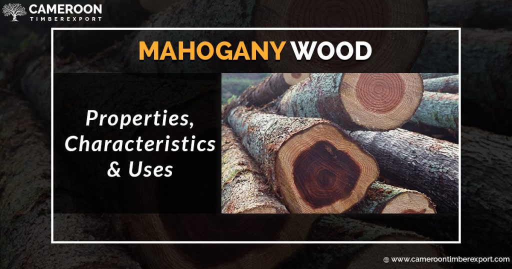Mahogany is a world-class wood species