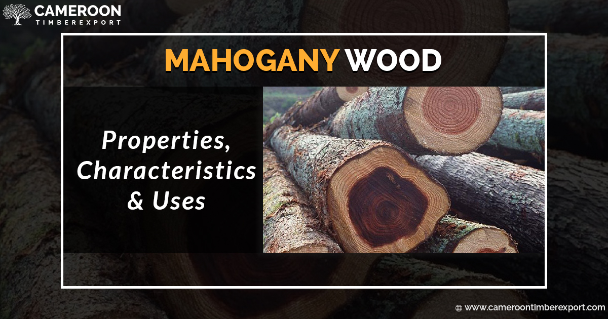 Mahogany Wood and its features