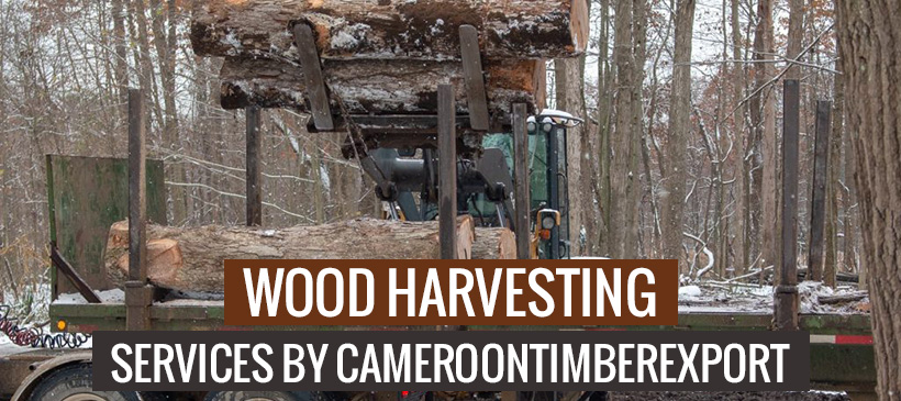 wood harvesting services by cameroontimberexport