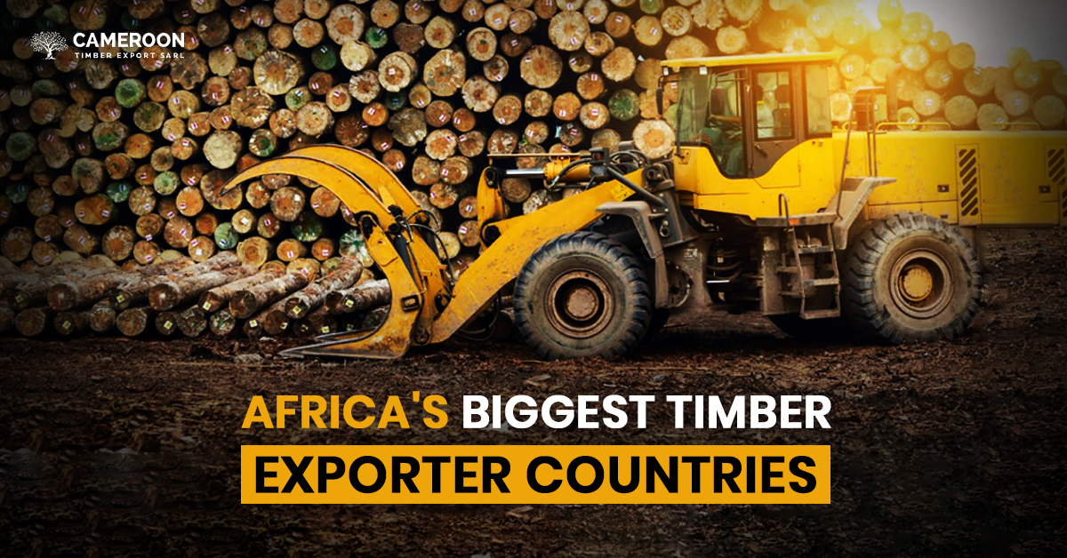 Africa's Biggest Timber Exporter Countries
