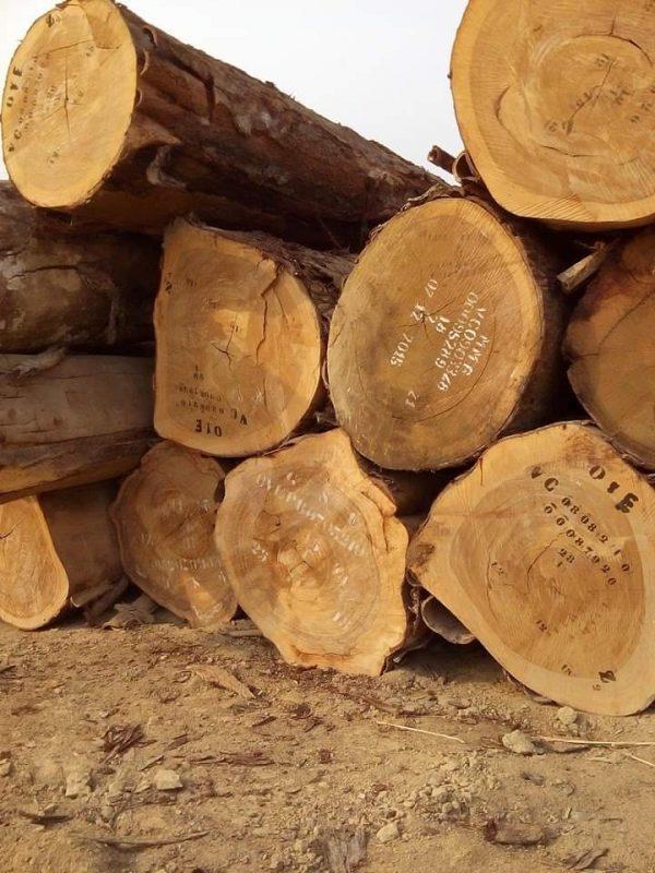 African-Ekop-Naga-Logs