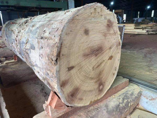 Ovangkol Timber Exporter