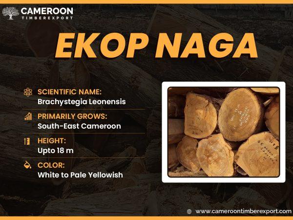ekop naga wood logs