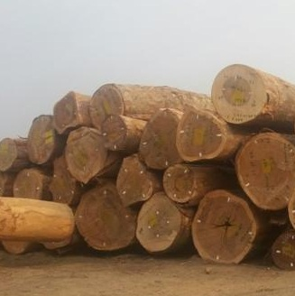 Ekop Naga Logs