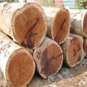 merbau wood logs
